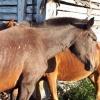 Жители поселка в Омской области опять пострадали от визита медведя