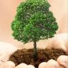 В омском парке имени 30-летия ВЛКСМ застройщик обещает посадить 464 дерева