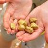 Как проводится современная золотодобыча