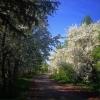 Прогноз погоды в Омске с 22 по 26 мая