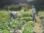 Подкормите огород!