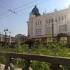 В центре Омска вырастили запрещенное растение