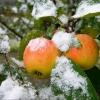 Садоводов предупреждают о заморозках в Омской области