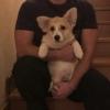 Омский депутат завел своей собаке страничку в соцсети