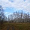 Клещи уже укусили 18 жителей Омской области