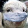 Компенсации пострадавшим от чумы свиней фермерам начнут выплачивать 9 августа