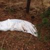 В селе Омского района обнаружили труп неизвестного