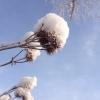 На выходных в Омске будет морозно и солнечно