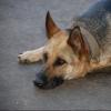 Собаки в омском приюте едят один раз в день
