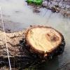 В Омске предупреждать жителей о вырубке деревьев решили щитами