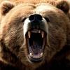 Медведя, терроризировавшего деревню Юдинка Омской области, застрелили после жалобы в соцсетях