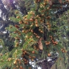 Омичи могут обменять макулатуру на саженцы еловых деревьев