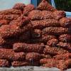 В Омской области сельхозкооператив принимает излишки овощей