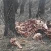 В лесополосе у Светлого нашли свалку черепов животных