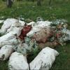 Под Омском вместо грибов мужчина нашел останки животных
