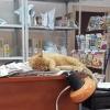 В Омске отделения почты России начали комплектовать рыжими котами