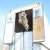 В Омск прибыл цирковой жираф Багир