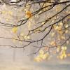 После теплых выходных в Омске снова похолодает