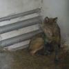 Правительство Омской области ведет прямую трансляцию из Большереченскоо зоопарка