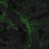 Омские твиты нанесли на карту мира