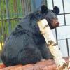Медведица Даша, волк, енот переехали в Большереченский зоопарк из разных городов России