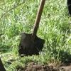 Судебные приставы обязали омскую мэрию ликвидировать несанкционированное кладбище домашних животных