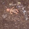 Прокурор Омска внес мэру представление за грязь в городе