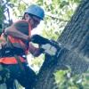 Сносом   аварийных   деревьев  займется специальное подразделение мэрии