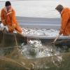 В Омской области в этом году можно выловить много карпа и пеляди