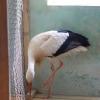 Двоим большереченцам, навредившим птицам из зоопарка, грозит до 5-ти лет лишения свободы