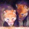 В Большереченском зоопарке родились волчата