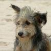 На лечение 3-летней омички собаки помогли собрать более 100 тысяч рублей