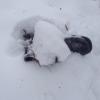 В районе Окружной дороги найдено тело пропавшего в прошлом году омича