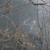 В Омской области рыба не дожила до весны