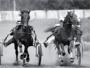 Тотализатор поможет конному спорту?