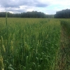 Омские сельхозпроизводители могут рассчитывать на льготные кредиты суммой более 270 миллионов рублей
