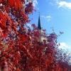 В конце рабочей недели в Омскую область придет летнее тепло