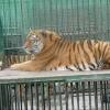 С животными в Большереченском зоопарке все хорошо: у них весна