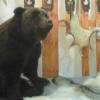 По просьбам охотников в Омской области увеличили квоту на добычу медведя