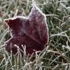 Синоптики предупреждают о заморозках до -8 градусов по Омской области