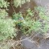 В Омке у Юбилейного моста нашли труп человека