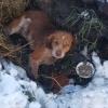 Беги по радуге, малыш: омич попытался спасти сбитую собаку, но не успел