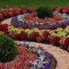 102 тысячи цветов высажено на омских улицах