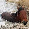 Полицейские в Омской области спасли краденного коня