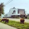 В Таре на маршрут не вышли автобусы Омскоблавтотранса