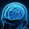 Ученые: человеческий мозг развивается до 30 лет