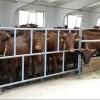 В Нововаршавском районе появится более качественное молоко