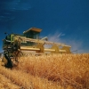 В Омской области аграрии намолотили 1,3 миллиона тонн зерна