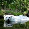Дождливому и прохладному лету радуется Гуля в зоопарке Омской области