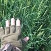 В Омской области аграрии ведут борьбу с сорняками и вредителями